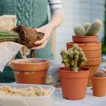 repotting a cactus